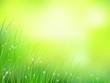 morning sunlight grass early dew softfocus pattern