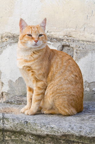 Orange tabby cat on stair-step.
