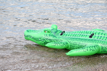 green floater crocodile in the water