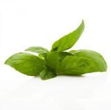 Fototapety foglie di basilico