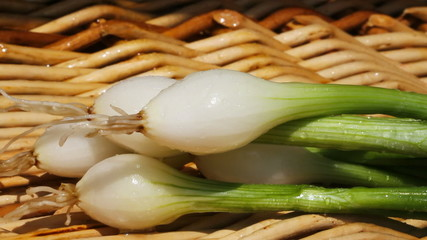 Green onions in a basket.