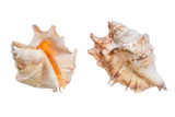 set of shell isolated on a white background