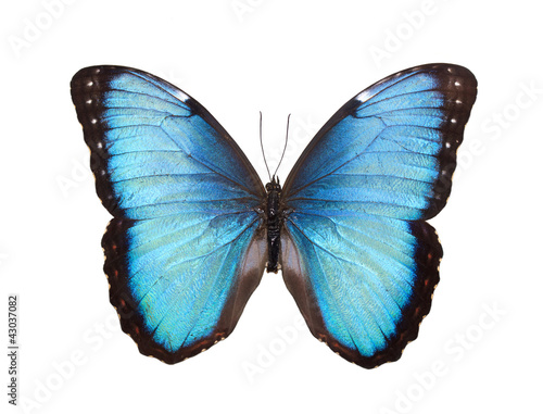 Deurstickers Vlinder Butterfly Isolated on White