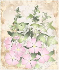 Greeting card with mallow.