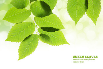 Fresh green leaves with bokeh background. Natural frame