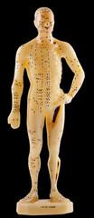 mannequin de médecine chinoise, face ventrale