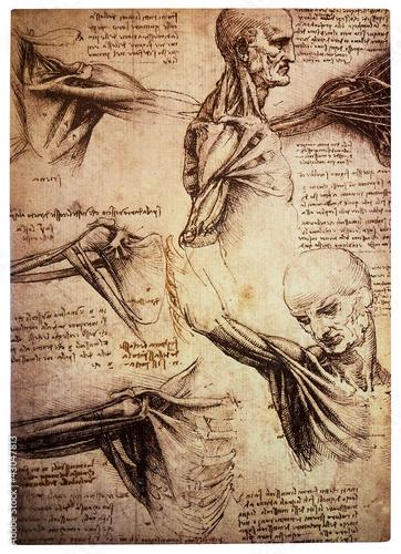 Leinwandbild Motiv Old anamtomical drawings by Leonardo DaVinci