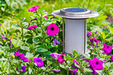 A solar-powered garden lamp - these save electricity and are ver