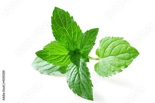 Mint Leaf - 43051281