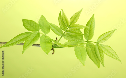 Branch with green leaves on green background