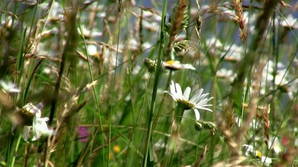 Swaying grass and flowers