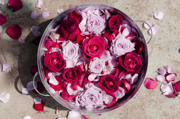 roses in a basin