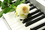 background of synthesizer keyboard with rose