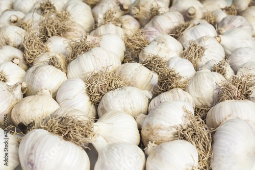 garlic background ,raw fresh food