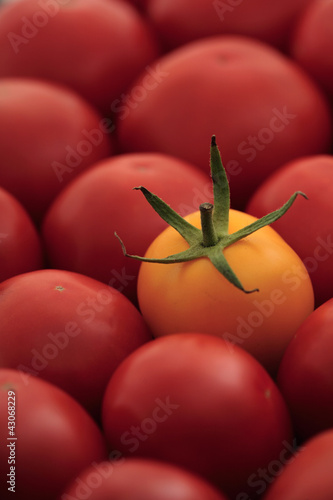 Many red tomatoes and one yellow in the center,  full frame