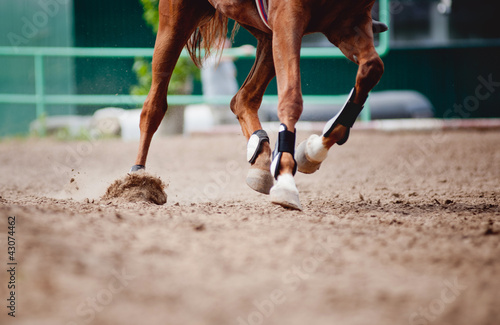 Papiers peints Chevaux Horse legs Running