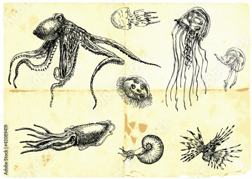 Hand-drawn collection. Marine life - SEA MONSTERS.