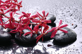 Fototapety Still life –blossom with zen stone
