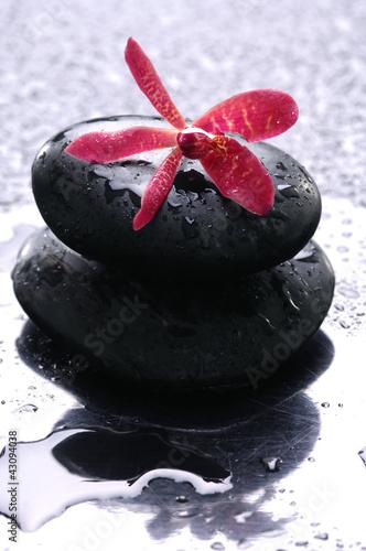 sterta-zen-kamienie-i-kwiat-z-kropli-woda