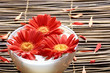 Beautiful red flower with petals in a bowl