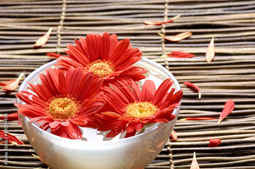 Beautiful red flower with petals in abowl