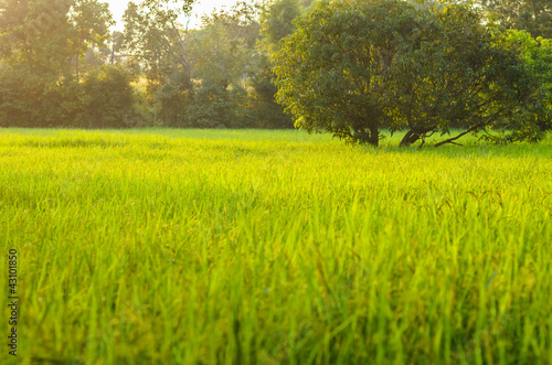 wild grass in bright sunset