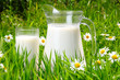 Jug and glass of milk over green grass