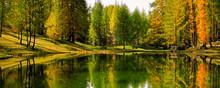 Lago сцин