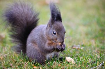 Squirrels in the park in Vienna