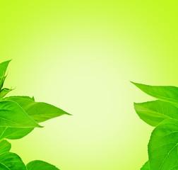 fresh leaf frame