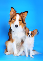 big and small dogs