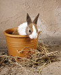 Furry rabbit in rustic flowerpot