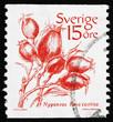 Postage stamp Sweden 1983 Dog rose, Wild Rose