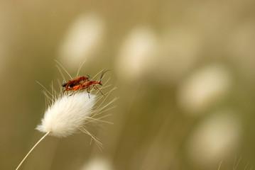 Composición con insectos