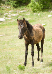 Foal Horse on green meadow