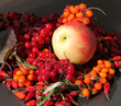 Постер, плакат: Осенний натюрморт с яблоком и ягодами