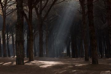Luce nel bosco1