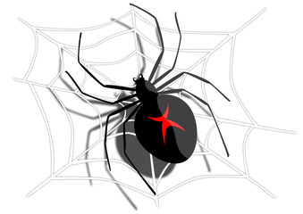 Spider - black widow