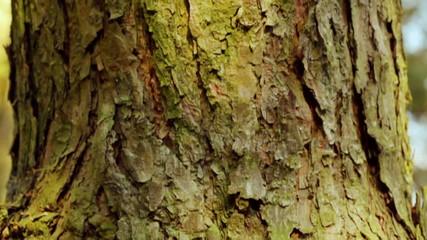 Tree movement