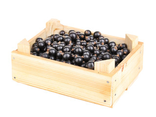 Black currant in crate isolated on white