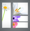 Design background of spring flowers brochure