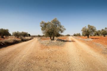 Country road in an agricultural landscape