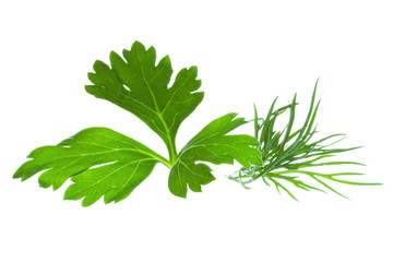 Parsley and Dill on white background