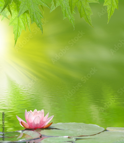 Fotobehang Lotusbloem lotus on the water