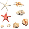 shells and starfishes collections