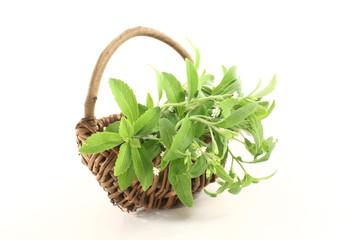 grünes Stevia