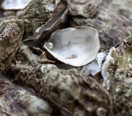 huîtres et perle