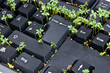 Keyboard with garden cress