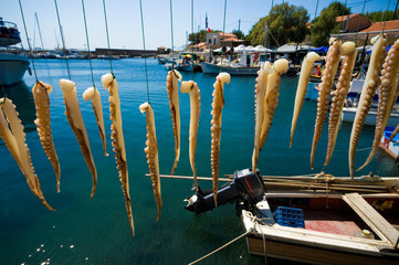 octopus tentacles drying in the sun, Molyvos harbor