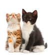 Two kitten